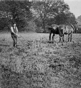 New Forest Oral History